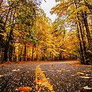 autumn road by Alexandr Grichenko