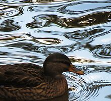 Duck on glass... by Debsonthesofa