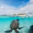 Honu at Kua Bay  by Flux Photography