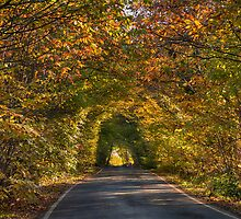 Hicks Forstal Road in autumn by Geoff Carpenter