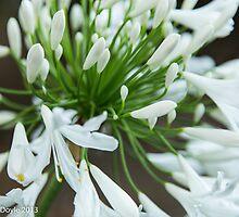 White Bloom by Eamonn Doyle