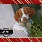 Christmas Card 32 by Australian Brittanys