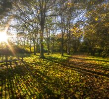 Autumn sunshine by DigitalSussex