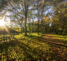 Autumn sunshine by DigitalSussex