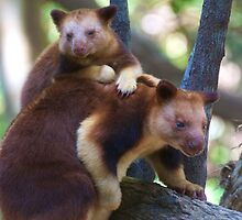 Mother & Child ~ Tree Kangaroos by Renee Hubbard Fine Art Photography