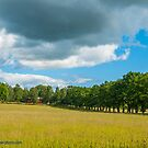 Yellow Field and Red Barn by Michael Brewer