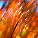 Fires of Fall - 2012 by Joseph Rotindo