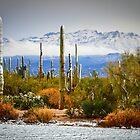 Desert Snow by Douglas Hamilton
