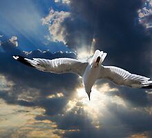 Gull Flying into a radiant sunset by Randall Nyhof