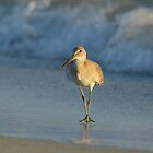 Willet by Heather Pickard