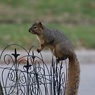 SOOC squirrel 1 by Keala