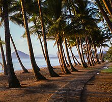 Panoramic Palms by Martin Canning