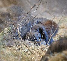 Just Resting My Eyes by Dana Horne