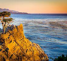 Lone Cypress by Douglas Hamilton