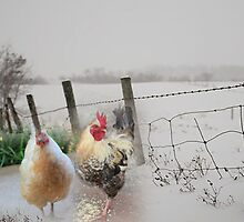 Farm talk - Making the best of winter by Maree  Clarkson