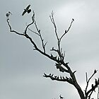 The Bird Tree by elsha