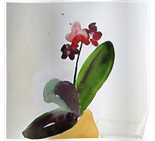 Provigo Orchid #10, watercolour Poster