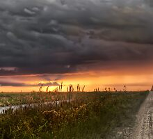 Everglades sunset by Kyle Irizarry