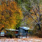 Autumn Snow by Diana Graves Photography