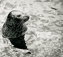 Sea Lion by Billyj