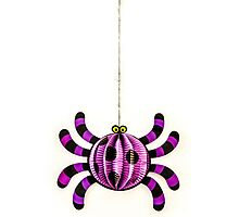 Funny Spider Photographic Print