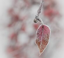 Fog, Leaf in Red, Frost by rjcolby
