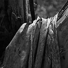 Draped bark - monochrome - large by Adam Jan Dutkiewicz