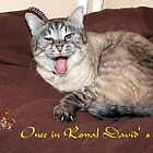 Sheba's Once in Royal David's City Christmas card by Dennis Melling