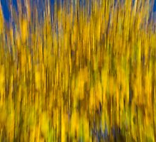 Abstract of Autumn by DavidHornchurch
