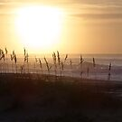 Sea Oats by digerati