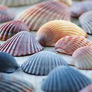 Shells by digerati