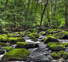 Deep Green River by Geoffrey Coelho