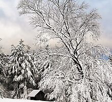 Tree in Snow by David Pratt