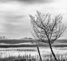 marsh, assateague island, virginia by g richard anderson