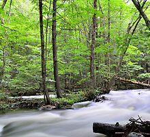 Fall River Rapids No. 1 by Geoffrey Coelho