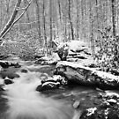 snow in the smokies by dc witmer