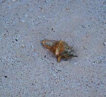 Seashell On The Beach by cherylorraine