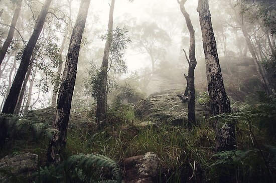 misty hills by ozzzywoman