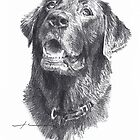 Wet black Labrador drawing by Mike Theuer