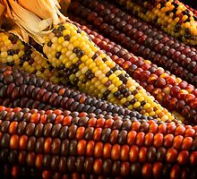 Indian Corn by Mark McKinney