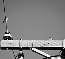 Bird on a Wire by Sandra  Aguirre