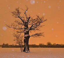 Winter Night in Hampton Common by Kasia Nowak
