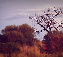 Natures Landscape in the  Northern Territory  by myraj