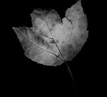 Leaf by myself22889