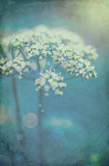 Parsley flowers by ozzzywoman