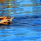 duck 1 by Tim Horton