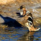 duck 2 by Tim Horton