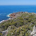 View from Rocky Cape, National Park, Tasmania, Australia by Margaret  Hyde
