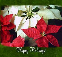 Mixed Color Poinsettias 2 Happy Holidays P1F1 by Christopher Johnson