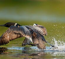 Take Off by Loon-Images